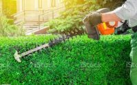 how to get a cheap lawn care service